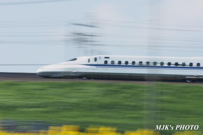 himawari2505.jpg