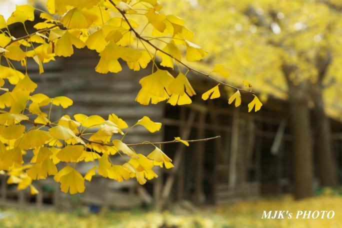 ichijyoji3716.jpg