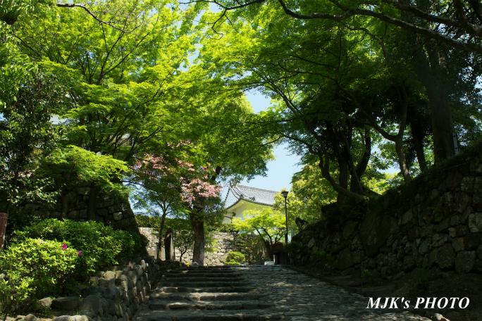 inuyamajyo4083.jpg