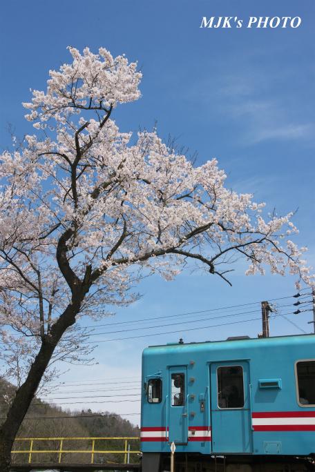 kochibora2198.jpg