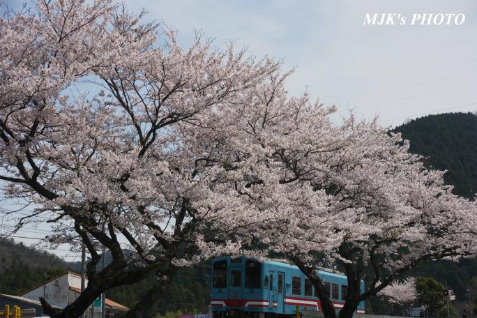 kochibora2199.jpg