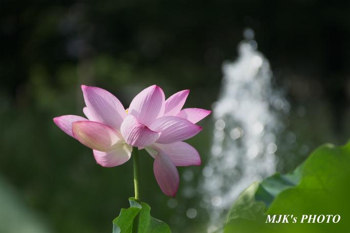 mitsumata4316.jpg