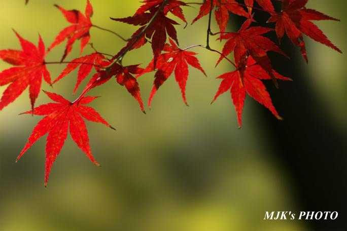 momiji3732.jpg