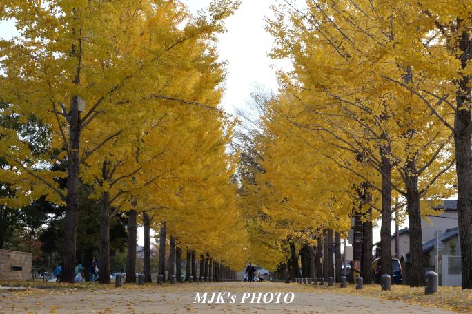 mypark3653.jpg