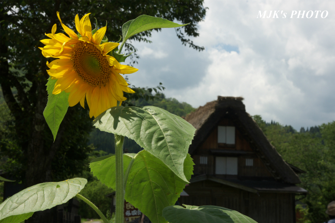 shirakawago4364.jpg
