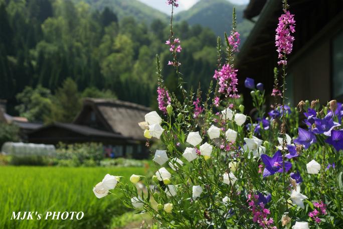 shirakawago4367.jpg