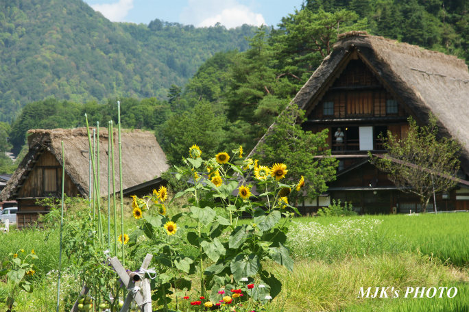 shirakawago4374.jpg