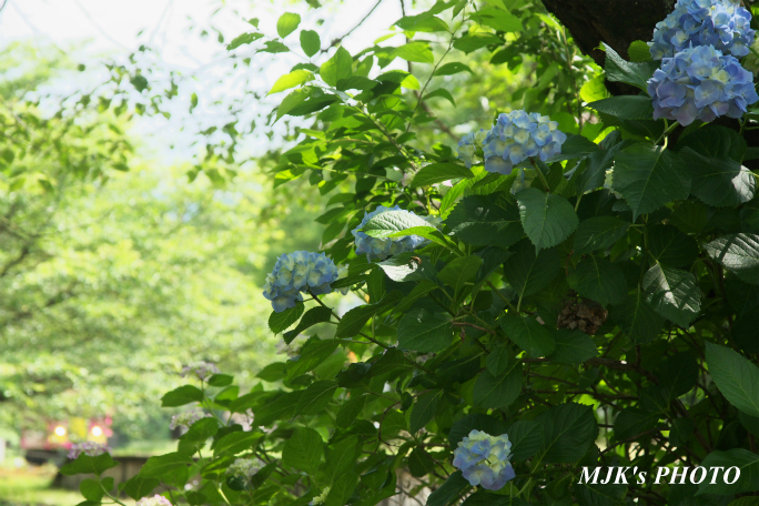 tarumi4250.jpg