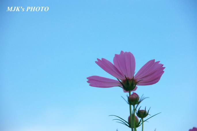 cosmos00794.jpg