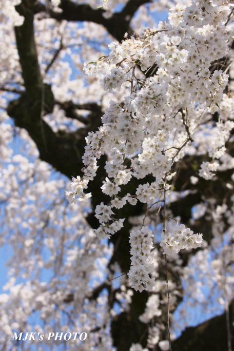 enmyouji4004.jpg