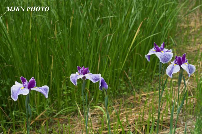 hanashobu3217.jpg