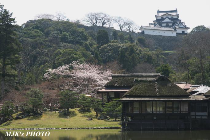hikone3036.jpg