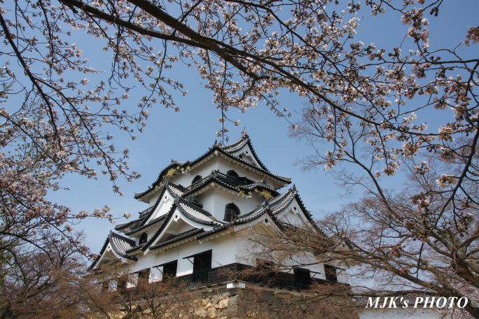 hikone3038.jpg