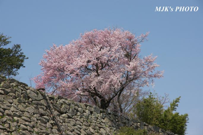 hikone3043.jpg
