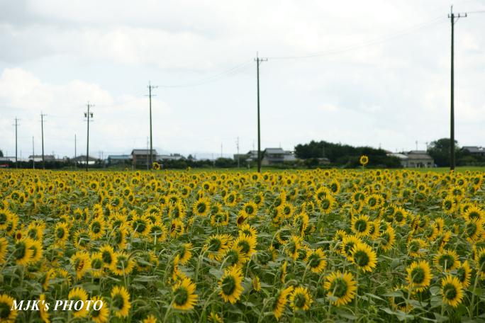 himawari00700.jpg