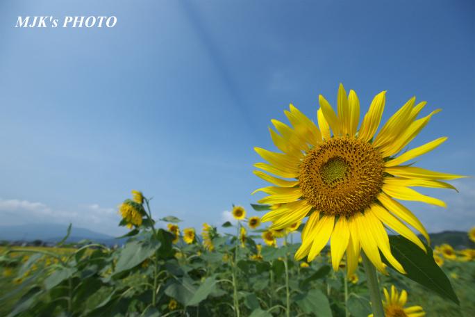 himawari00729.jpg