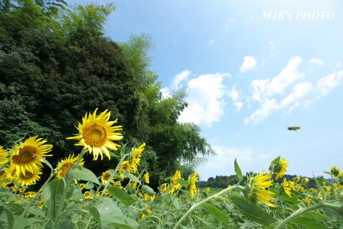 himawari00730.jpg