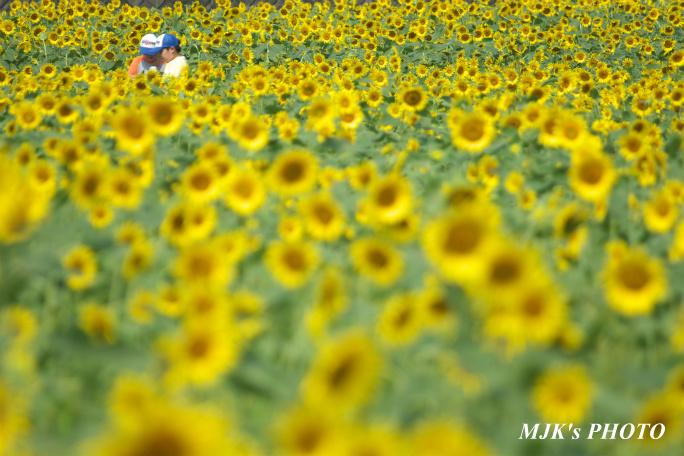 himawari00733.jpg