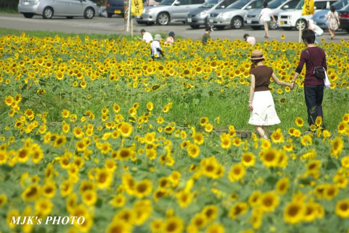 himawari00735.jpg