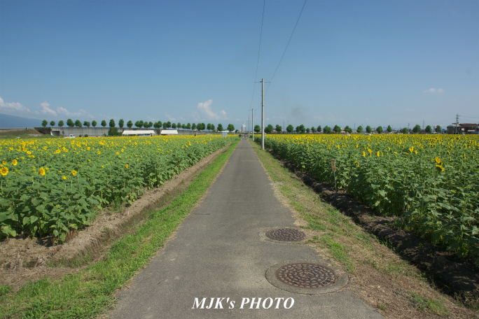 himawari2498.jpg