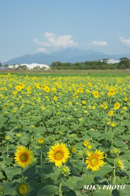 himawari2499.jpg