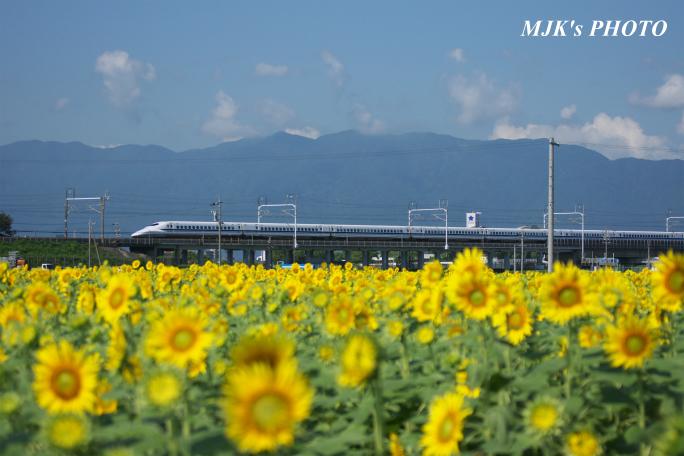 himawari2500.jpg