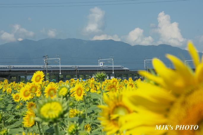 himawari2501.jpg