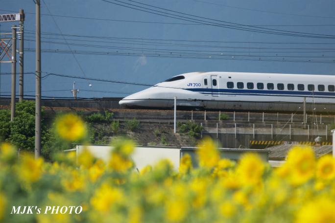 himawari2502.jpg
