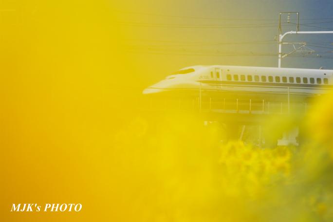 himawari2503.jpg