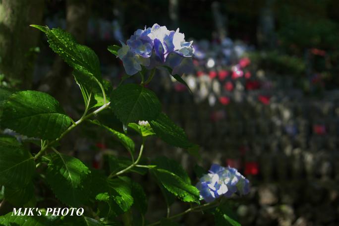 houfukuji3244.jpg