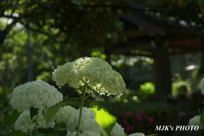 houfukuji3247.jpg