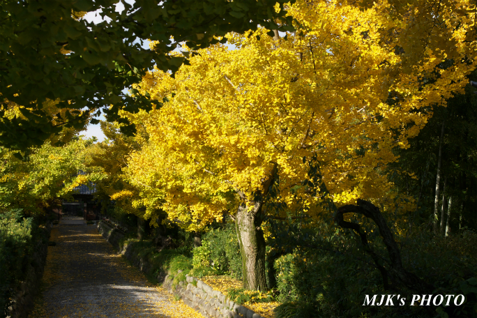 ichijyoji2733.jpg