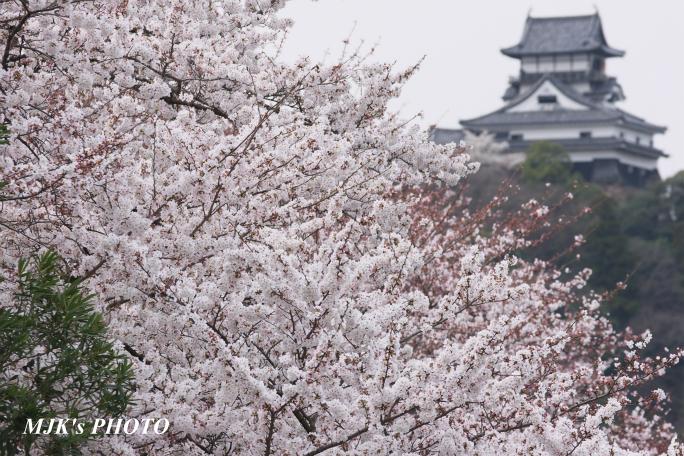 inuyama3011.jpg
