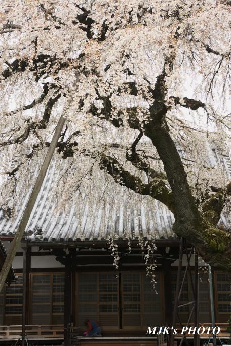 inuyama3022.jpg