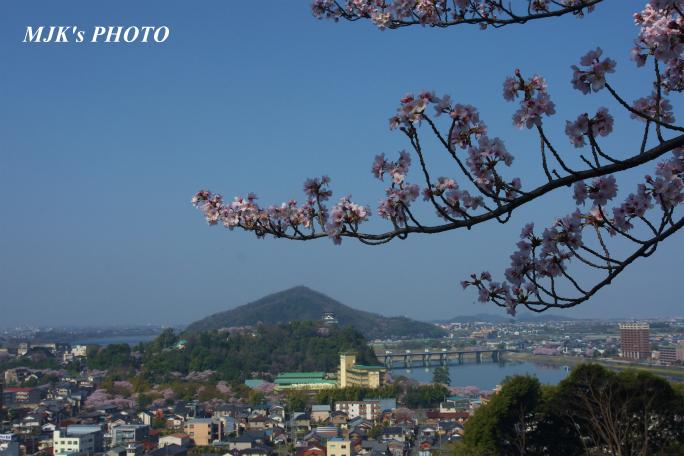 inuyamajo1290.jpg