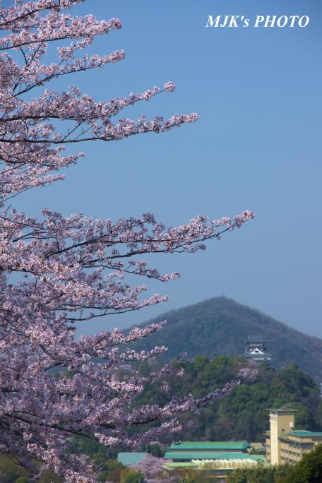 inuyamajo1292.jpg