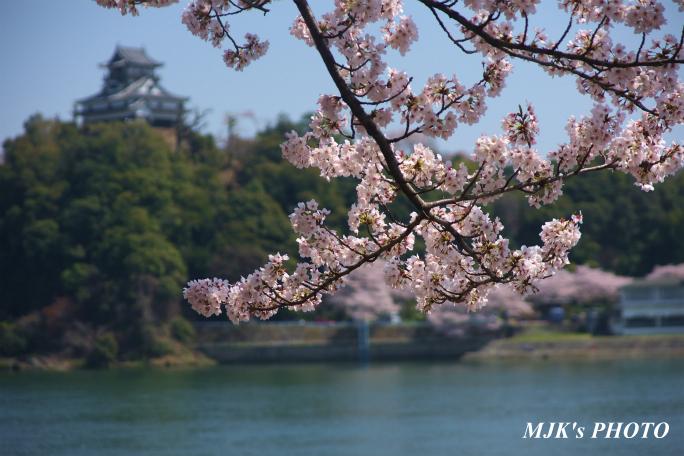 inuyamajo1295.jpg