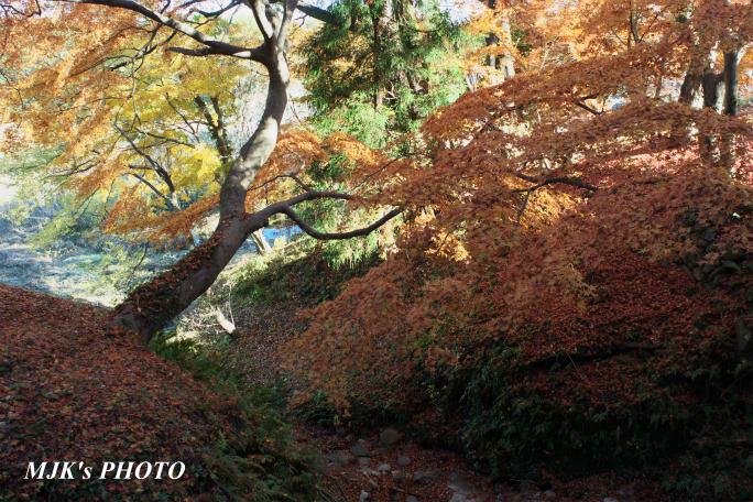 kanigawa2799.jpg