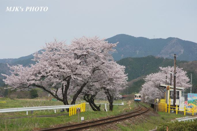 kochibora2172.jpg