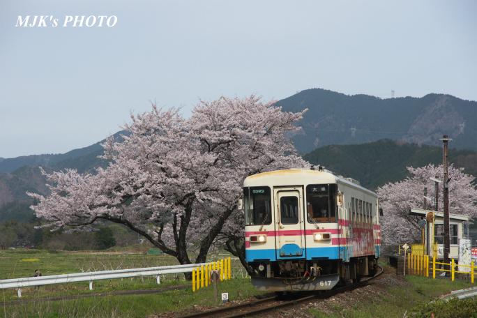 kochibora2174.jpg