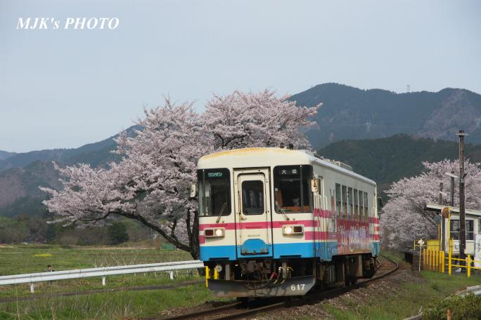 kochibora2175.jpg