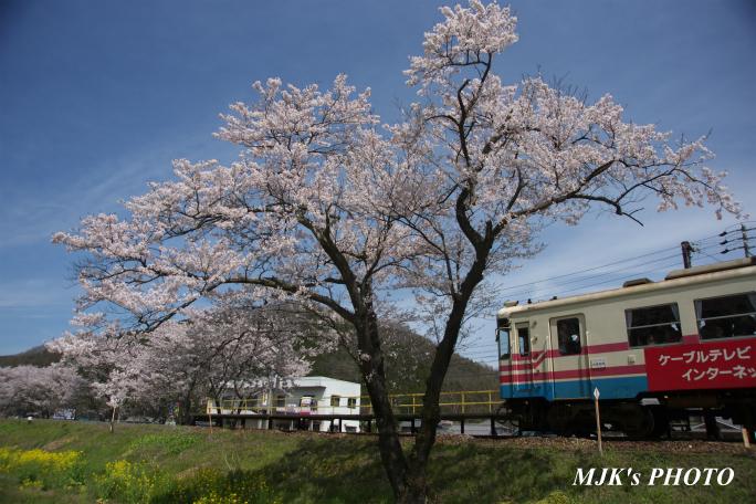 kochibora2190.jpg