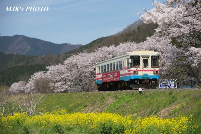 kochibora2191.jpg