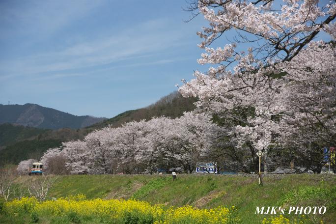 kochibora2192.jpg