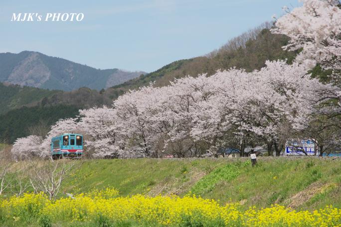 kochibora2194.jpg