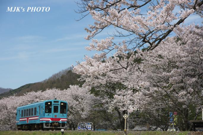 kochibora2195.jpg
