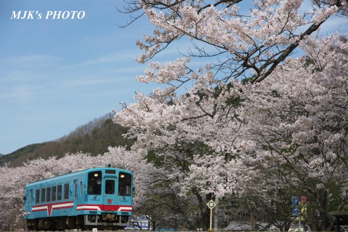 kochibora2196.jpg