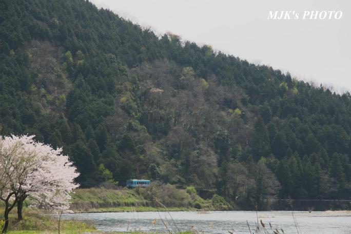 kochibora2200.jpg
