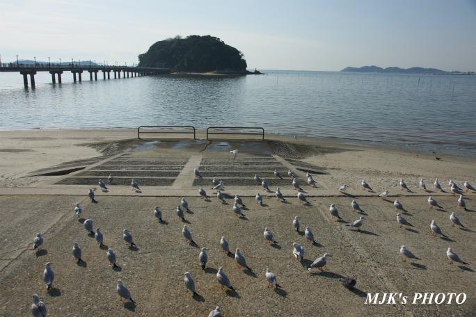 mikawawan2859.jpg