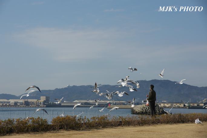 mikawawan2861.jpg